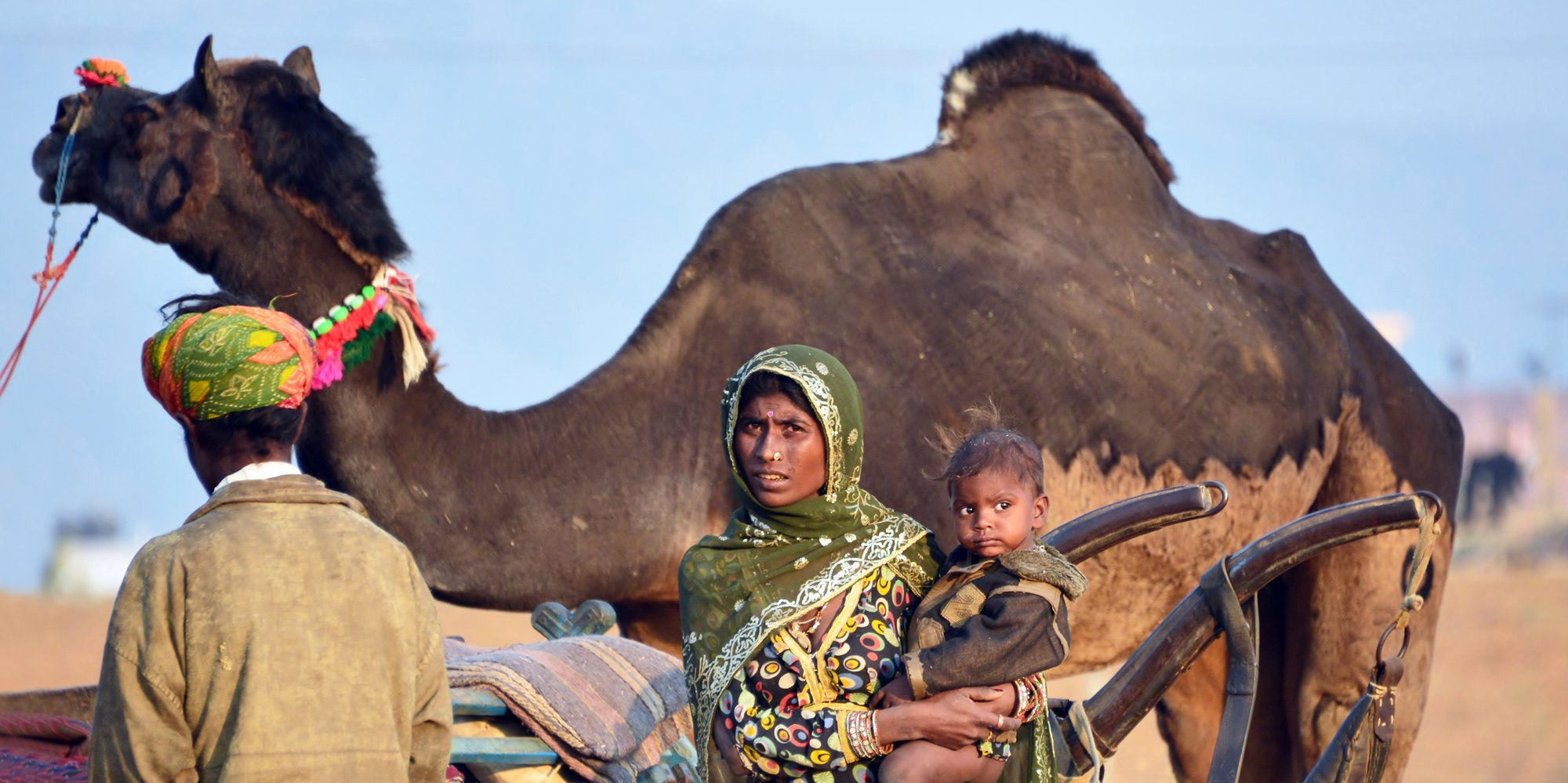 Curiosity, Pushkar Fair