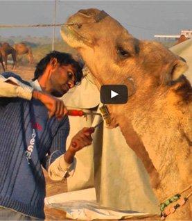 Pushkar videos